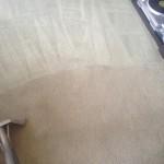 Carpet-Cleaning-San Francisco