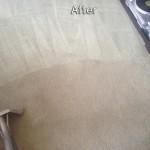 San Francisco-Carpet-Cleaning-Company