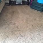 San Francisco-Dirty-Carpet