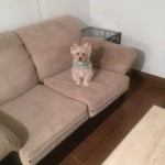 San Francisco-Sofa-Pet-Stain-Cleaning