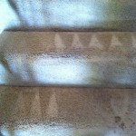 San Francisco-Stairs-Carpet-Cleaning